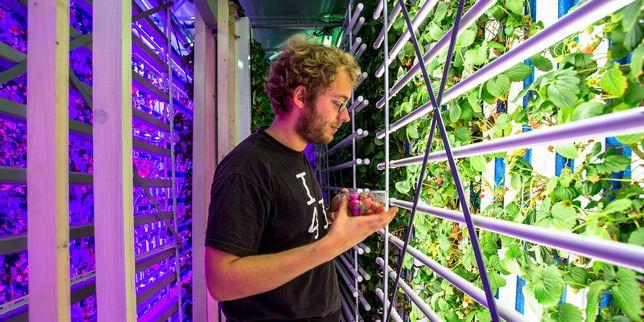 cultiver ses légumes dans un container maritime